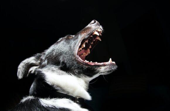 Co zrobić, gdy pies szczeka na ludzi?